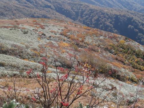 ナナカマドと紅葉.jpg