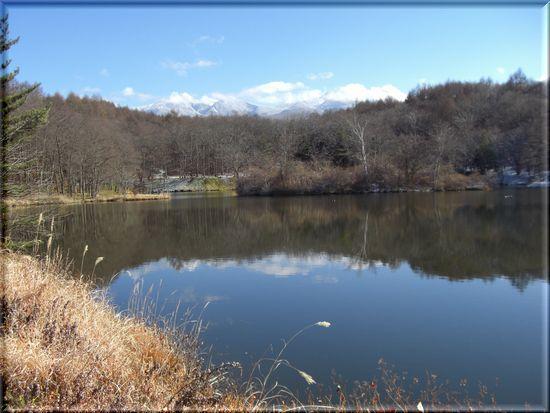 三井の森と池.jpg
