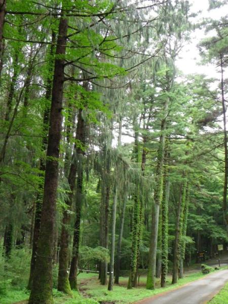 木のつたブログ用.jpg