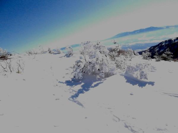 樹氷ブログ.jpg