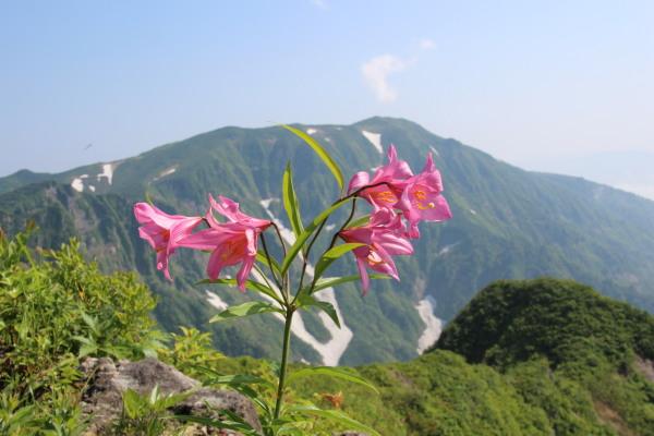 浅草岳とヒメサユリ・ブログ用.jpg