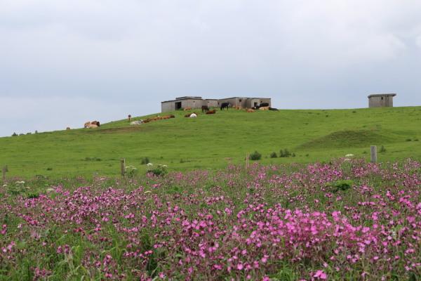 海岸の反対側は牧場・ブログ.jpg