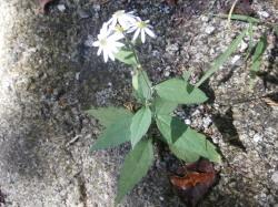 白い花・ブログ用.jpg