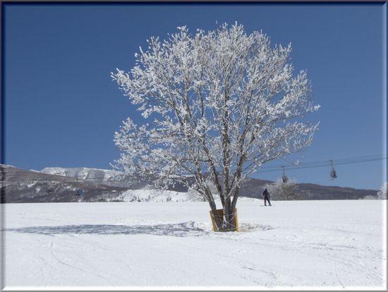雪の花の木.jpg