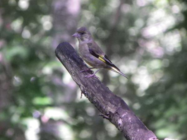 鳥・ブログ.jpg
